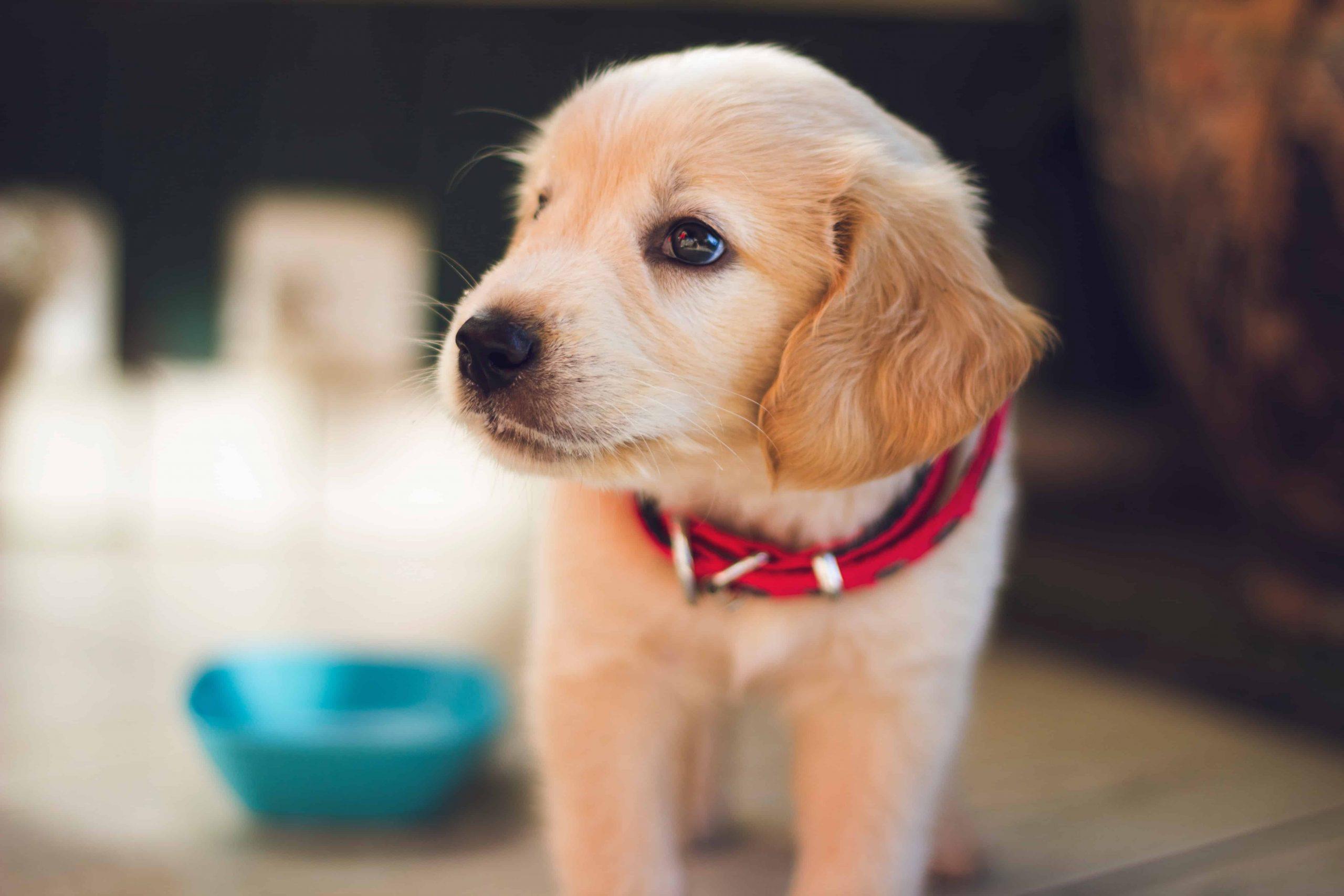 CBD Öl für Hunde: Test & Empfehlungen (04/21)