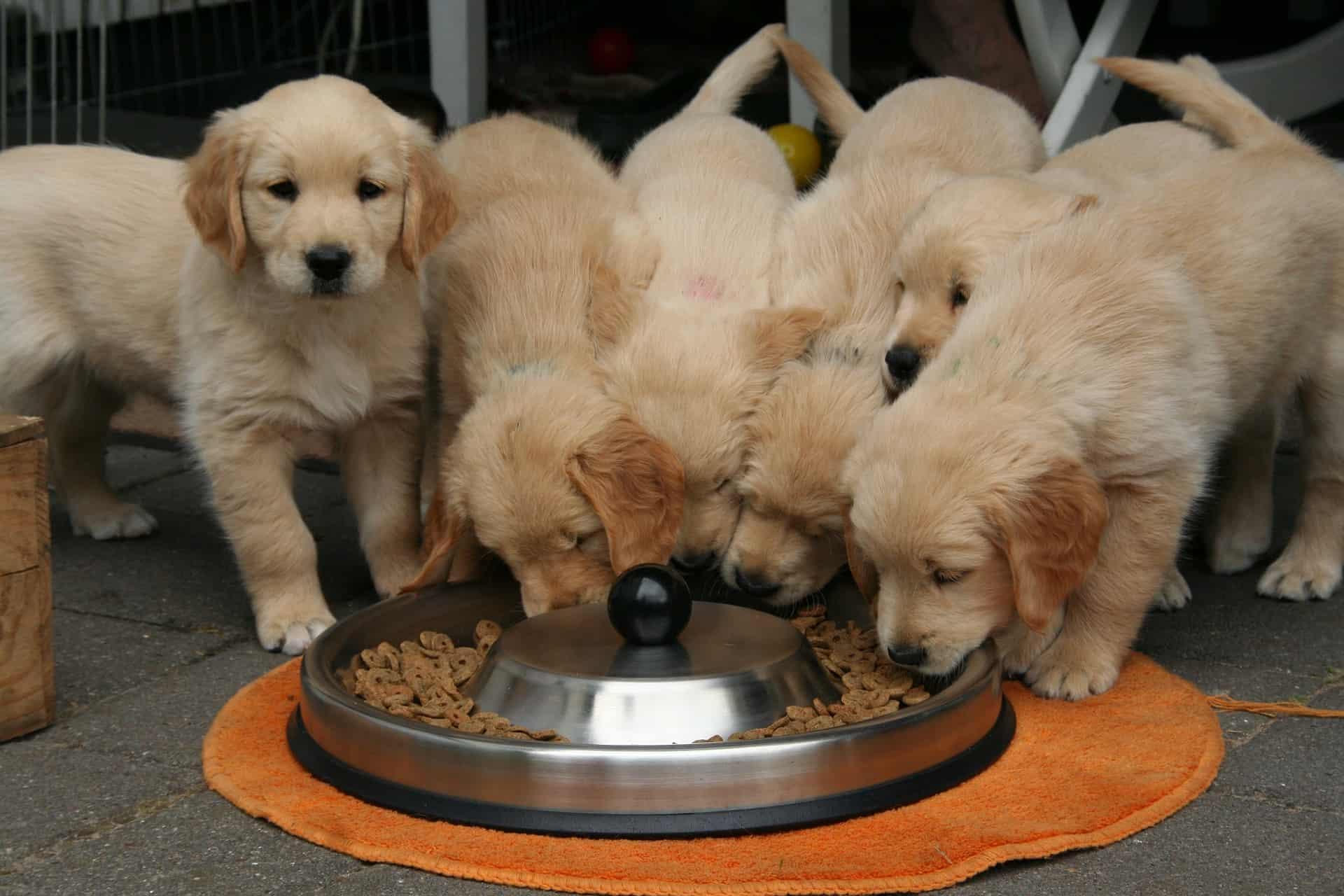 Bosch Hundefutter: Test & Empfehlungen (07/20)