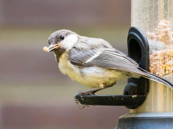 Vogelfutterspender: Test & Empfehlungen (01/20)