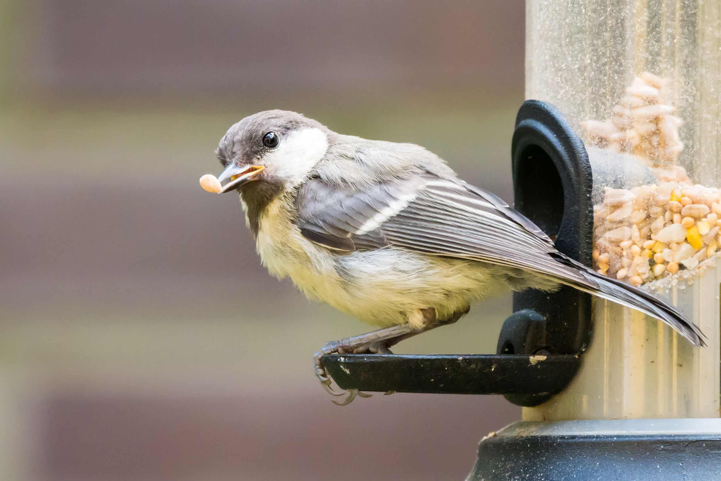 Vogelfutterspender: Test & Empfehlungen (02/20)