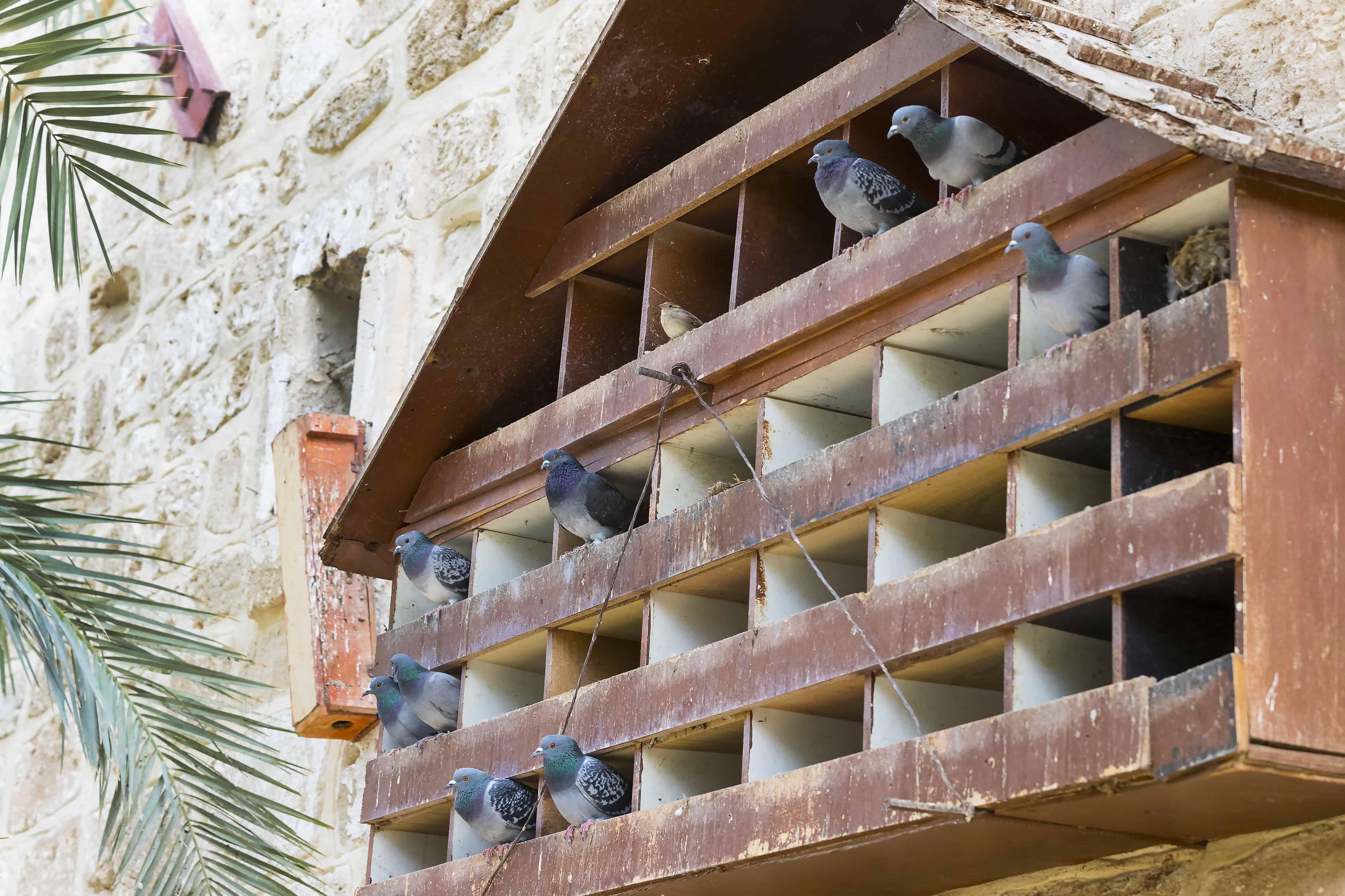 Taubenschlag: Test & Empfehlungen (01/20)