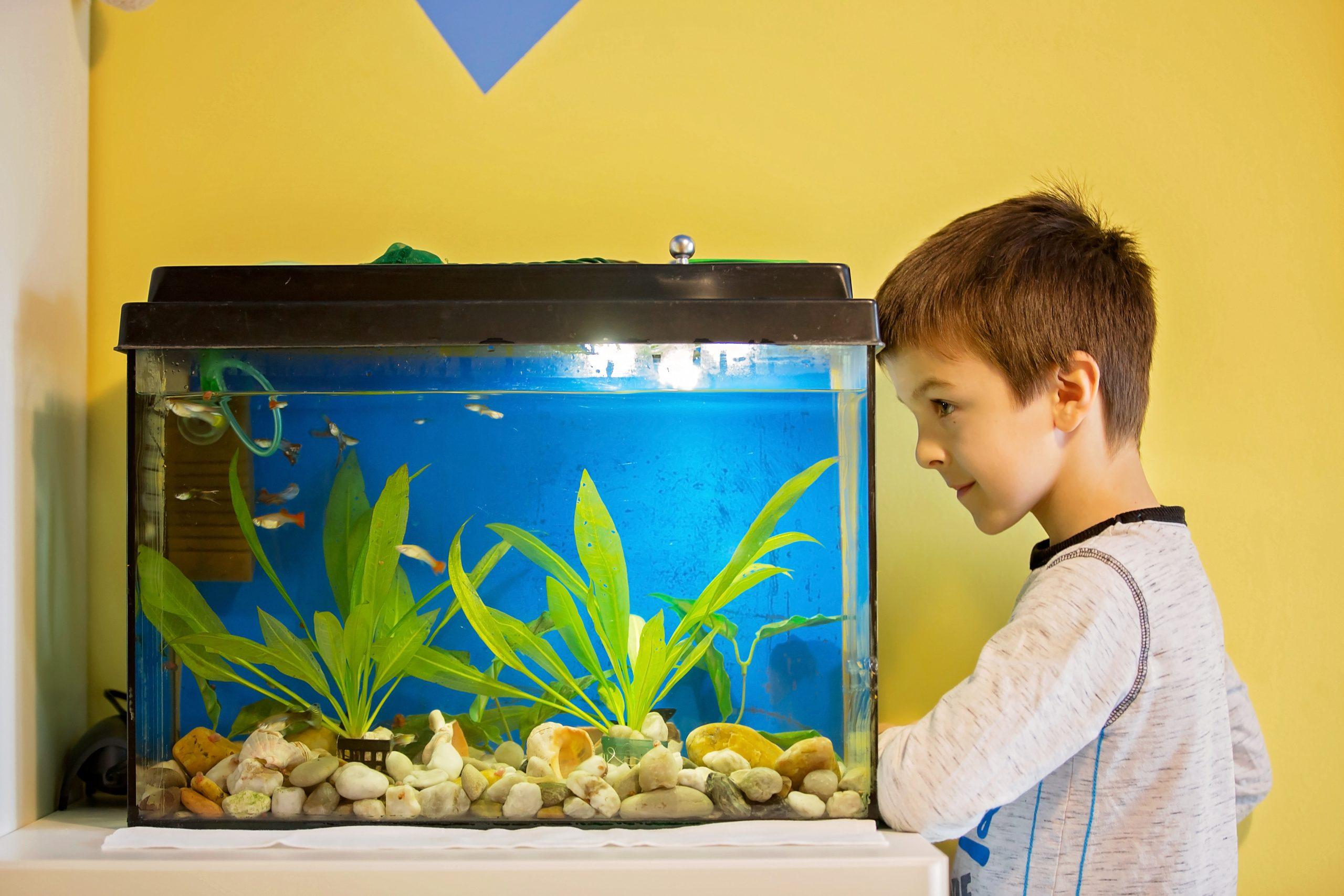 Fischfutterautomat: Test & Empfehlungen (09/20)