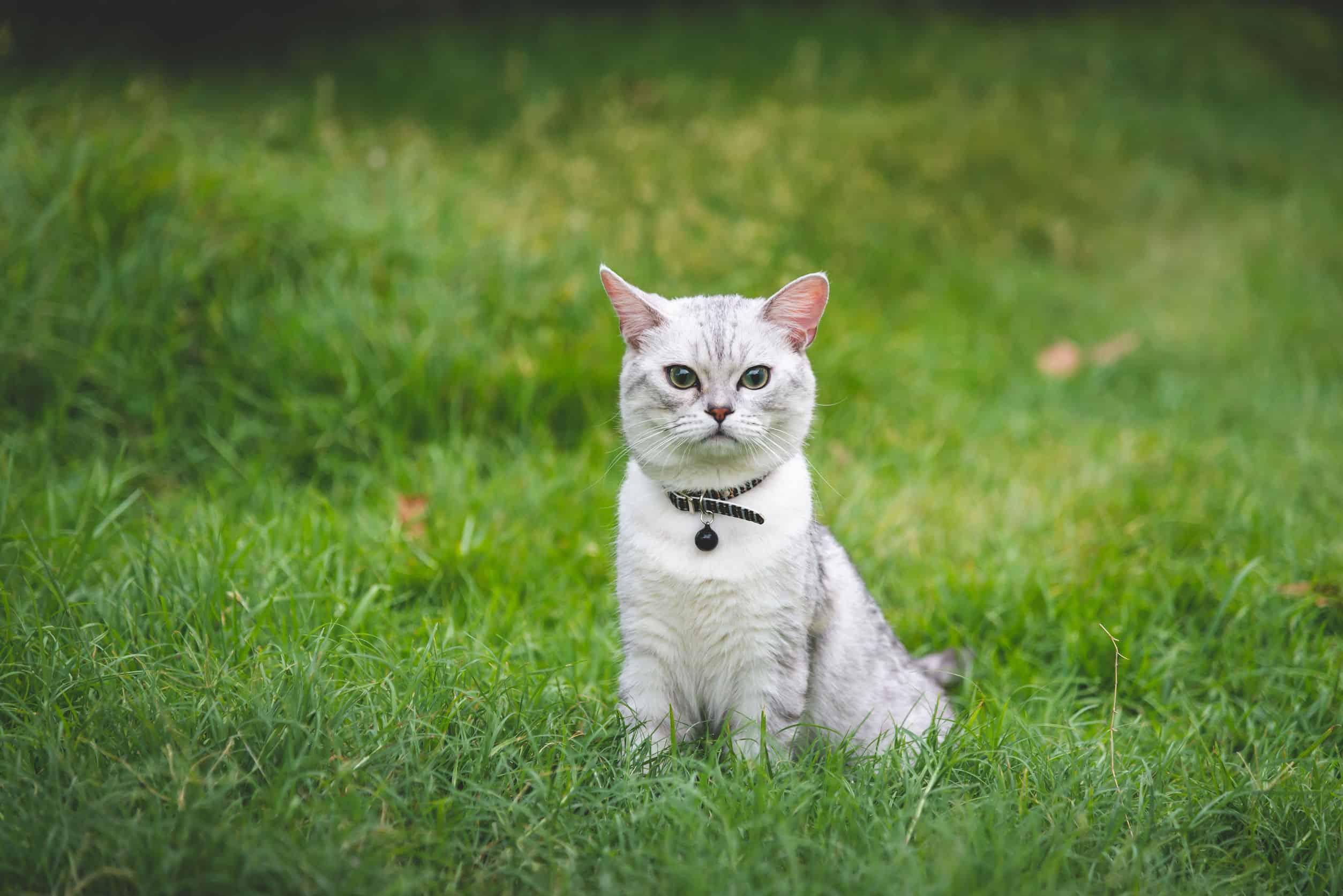 Katzen Zeckenhalsband: Test & Empfehlungen (06/20)