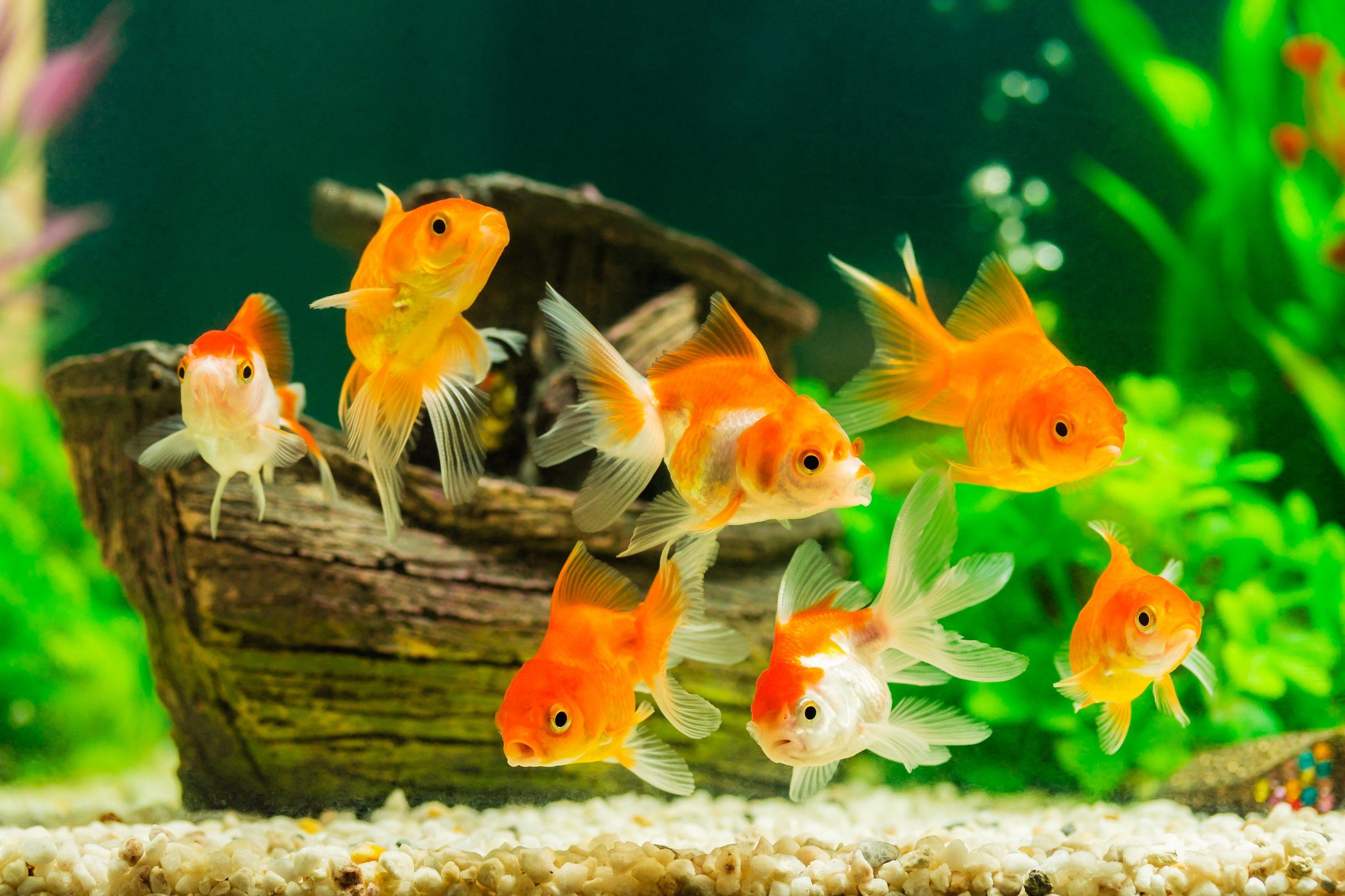 Fischfutter: Test & Empfehlungen (05/20)
