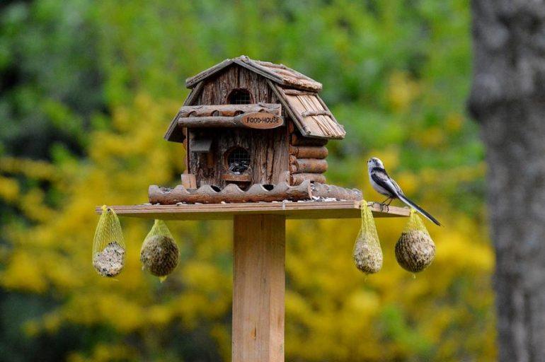 Vogelhaus mit Ständer: Test & Empfehlungen (05/21)