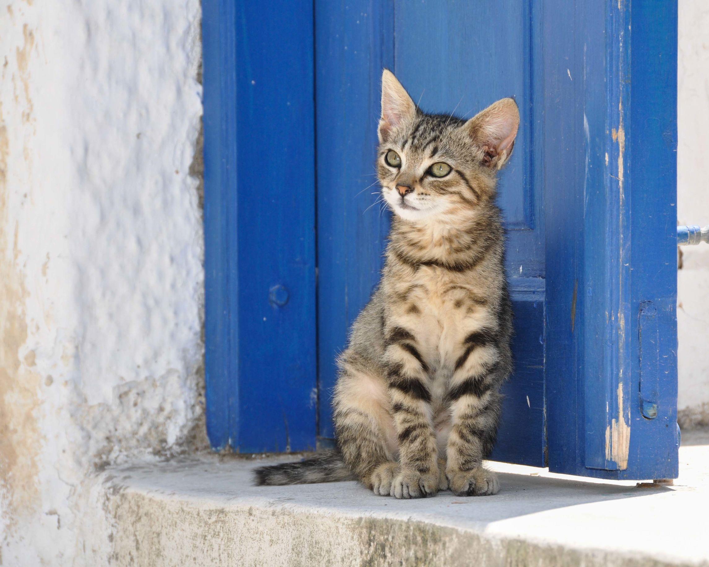 Katzenklingel: Test & Empfehlungen (09/20)