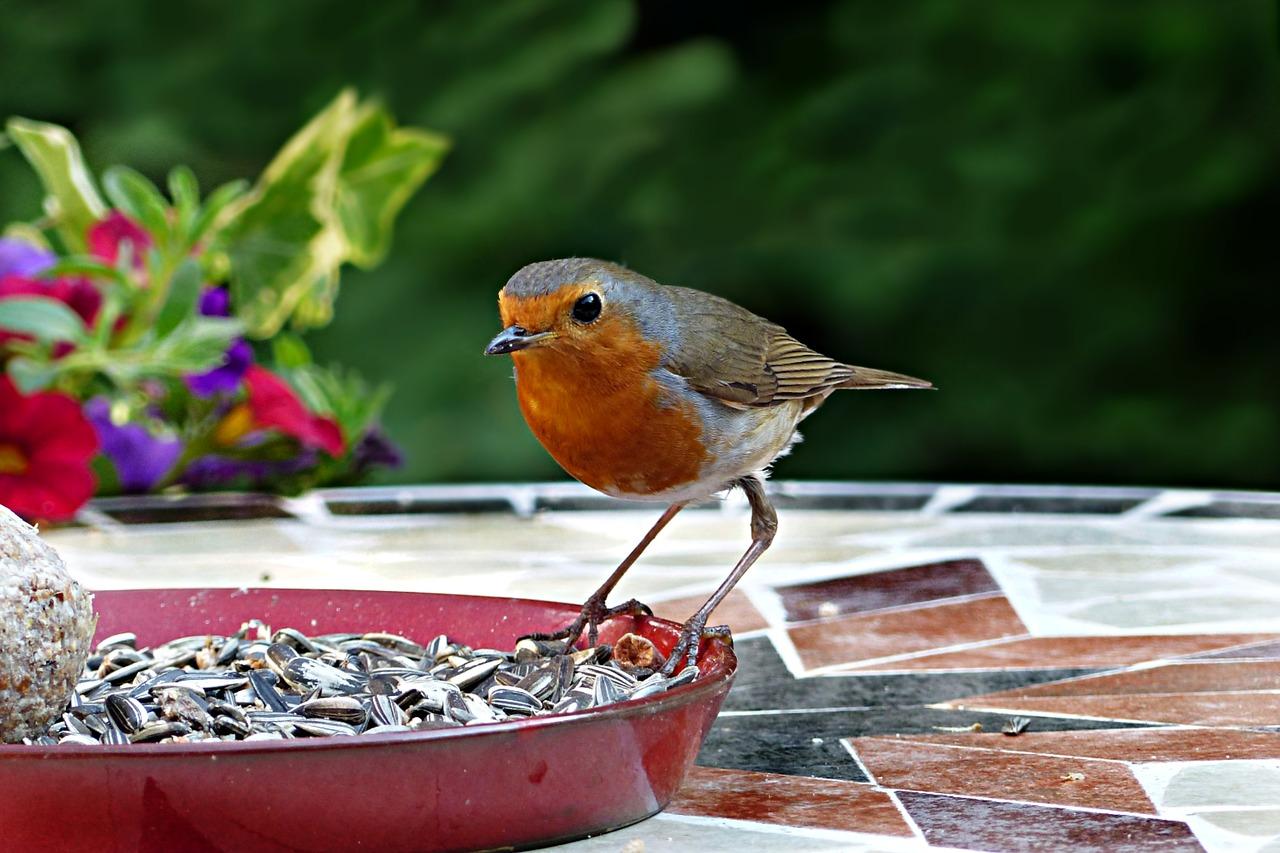Wildvogelfutter: Test & Empfehlungen (04/21)