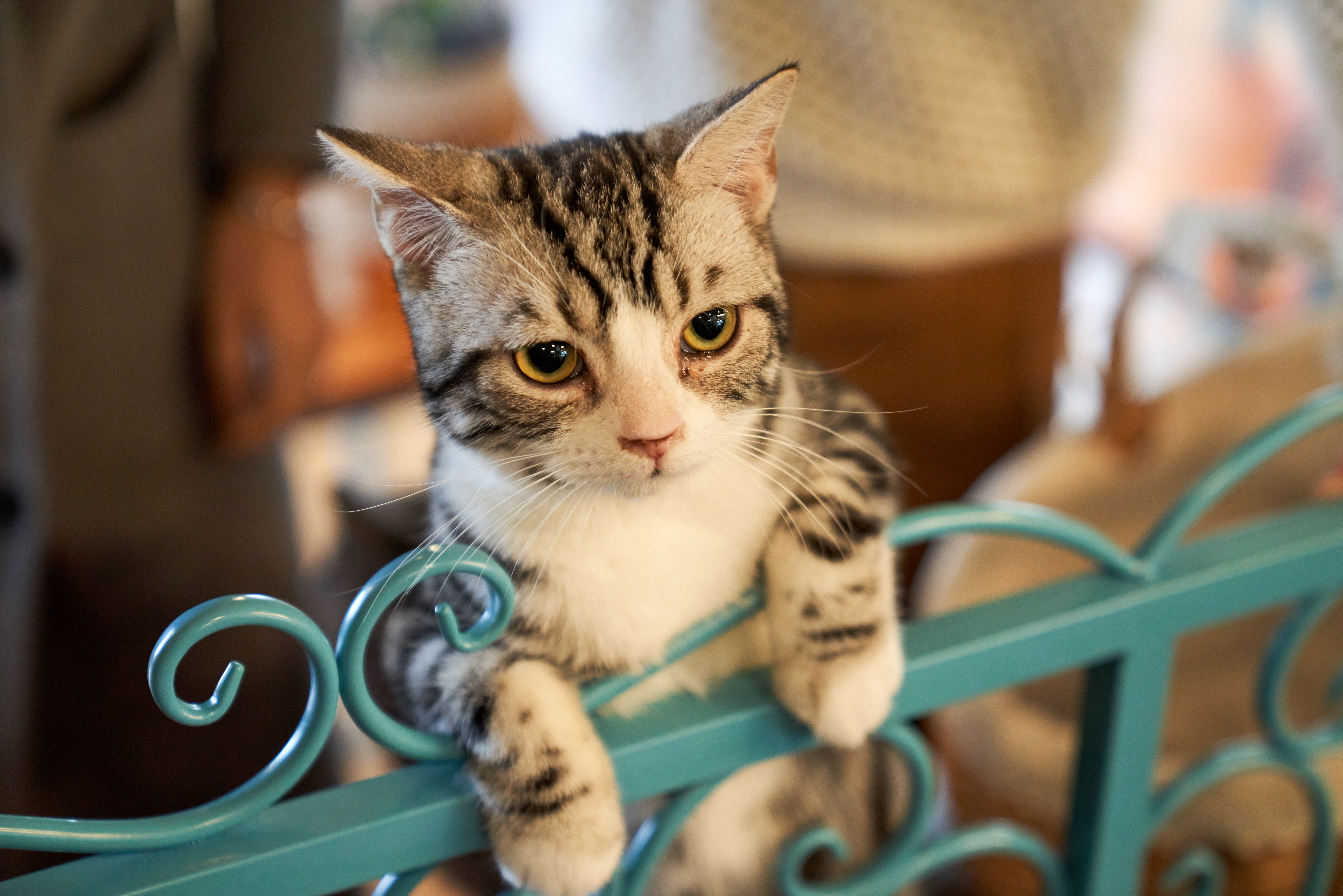 Ein Kätzchen