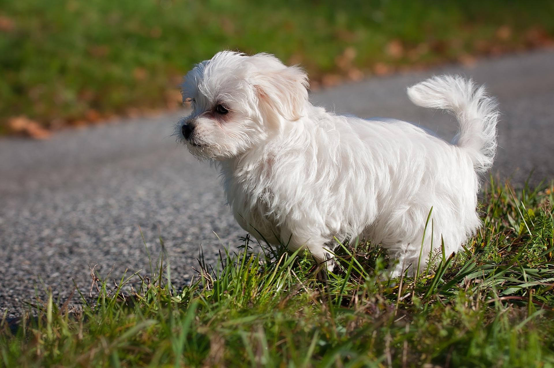 Hund stubenrein bekommen: Tipps wie dein Hund stubenrein wird
