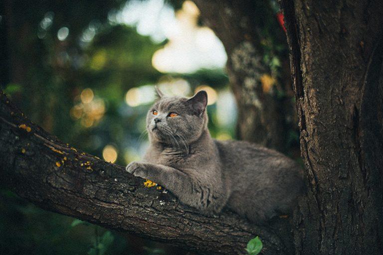 Katze auf einem Baum