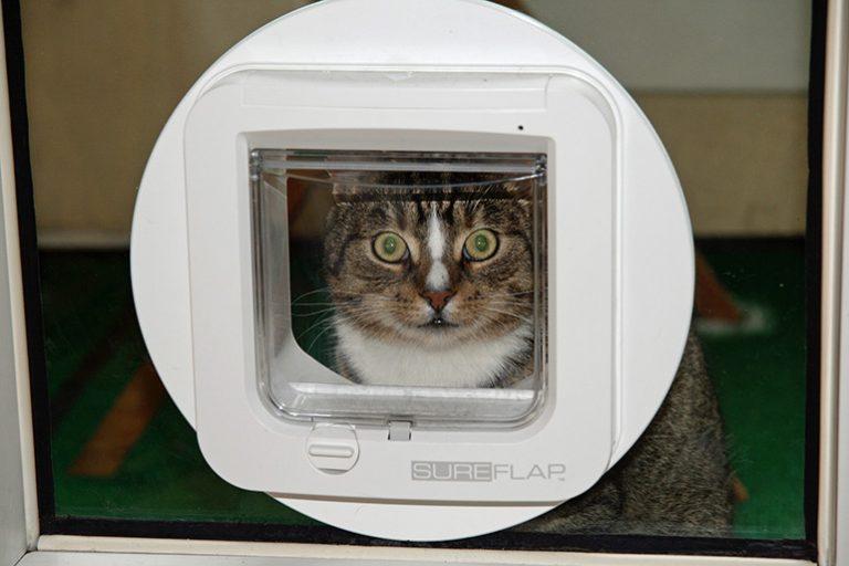 Eine Katzenklappe