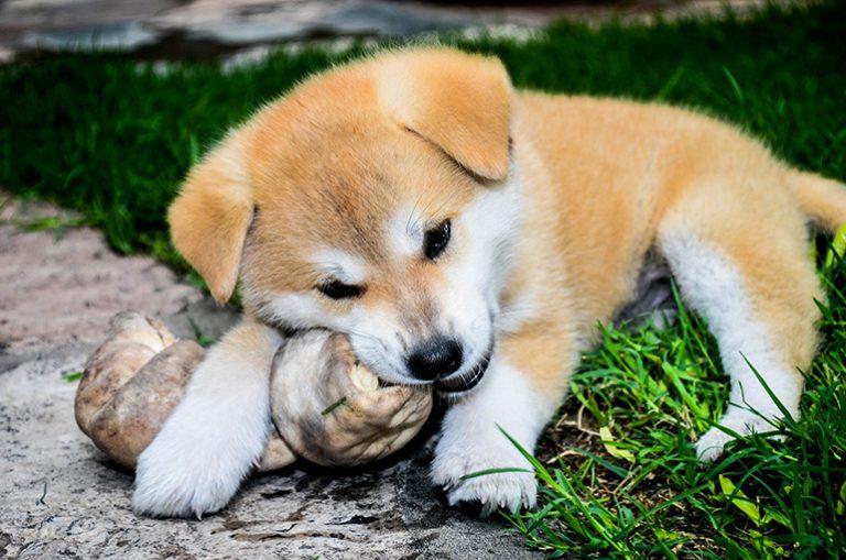 Kauknochen Test Empfehlungen 09 20 Petmeister