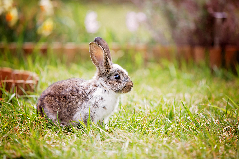 kaninchenfutter 0