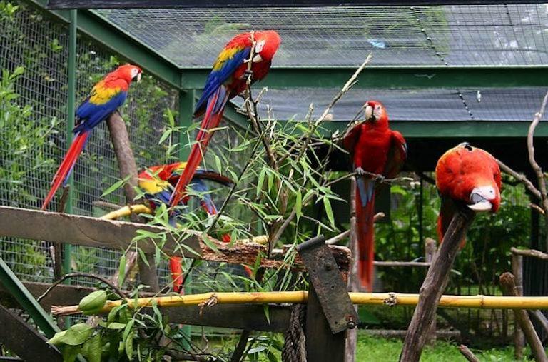 Papageienkäfig-1