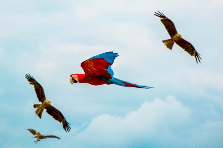 Papageienkäfig-3
