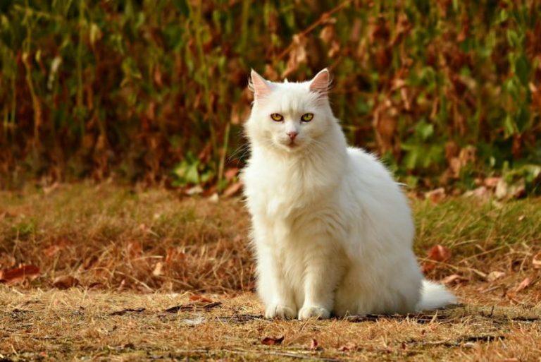 Katzenklo-1