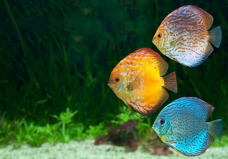 Aquarium Heizung-2