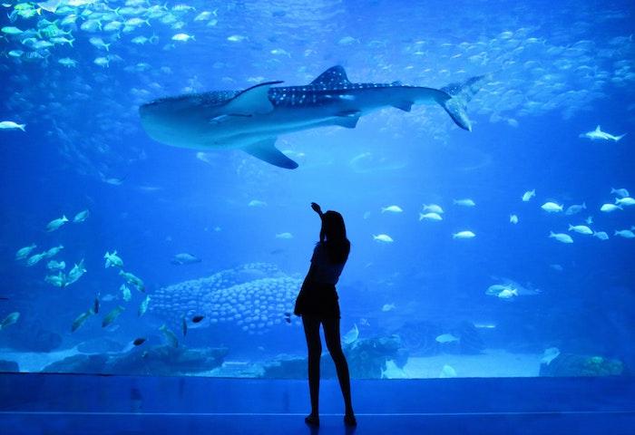 Aquarium Heizung-1