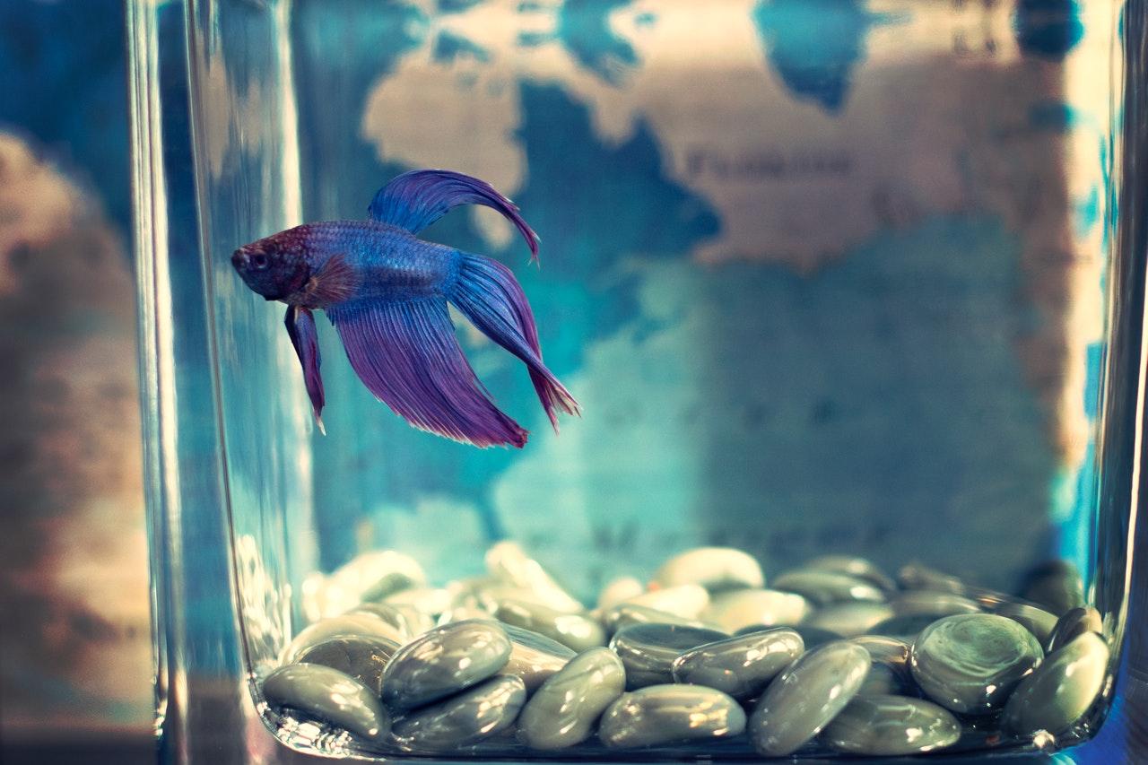 Aquarium Heizung: Test & Empfehlungen (04/21)