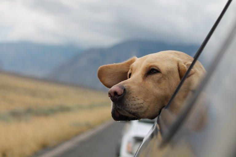 faltbare Hundebox-3