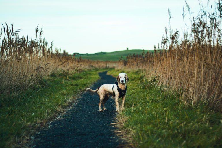 GPS Tracker Hund-1
