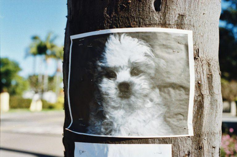 GPS Tracker Hund-2