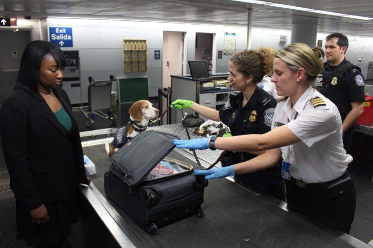 GPS Tracker Hund-3