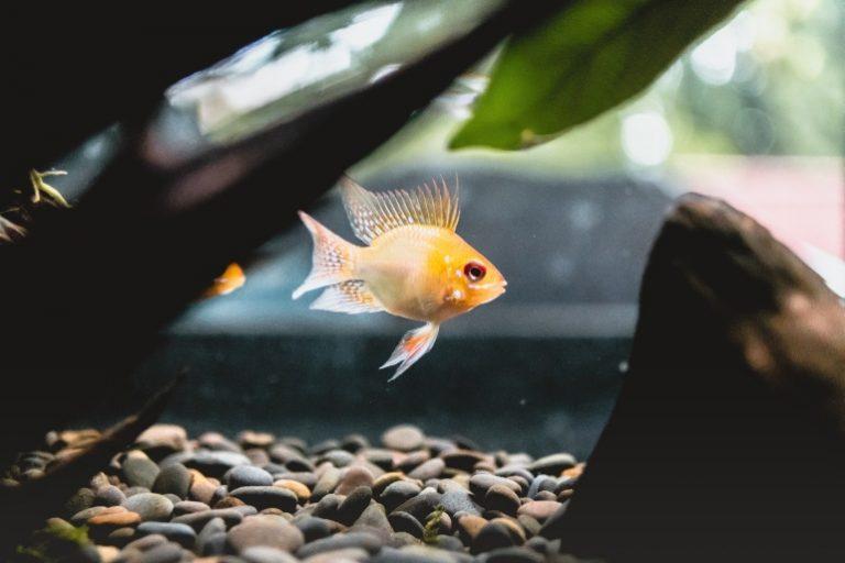 Futterautomat Aquarium