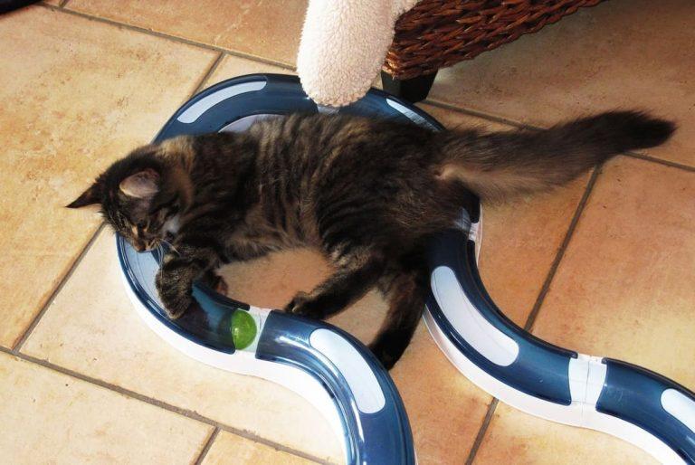 Katzenspielzeug-1
