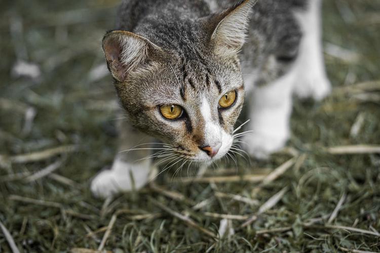 Katzengeschirr-2