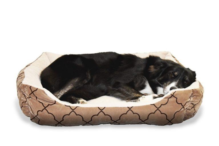 orthopädisches Hundebett-1