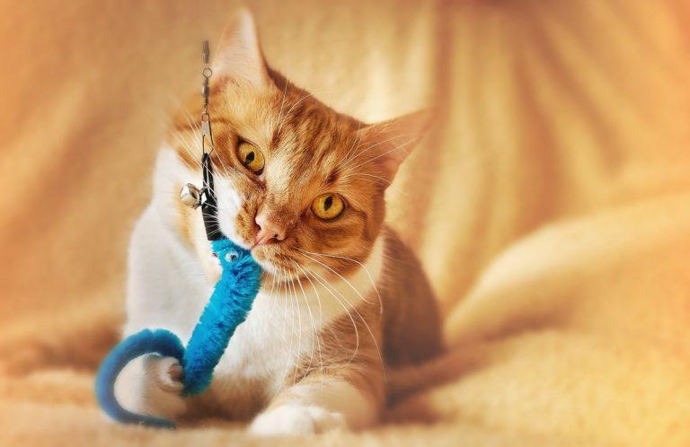 Katzenspielzeug-2