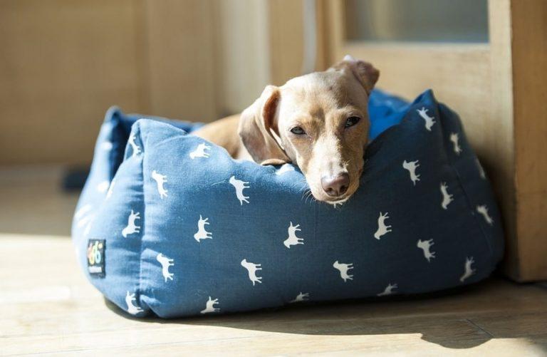 orthopädisches Hundebett-2