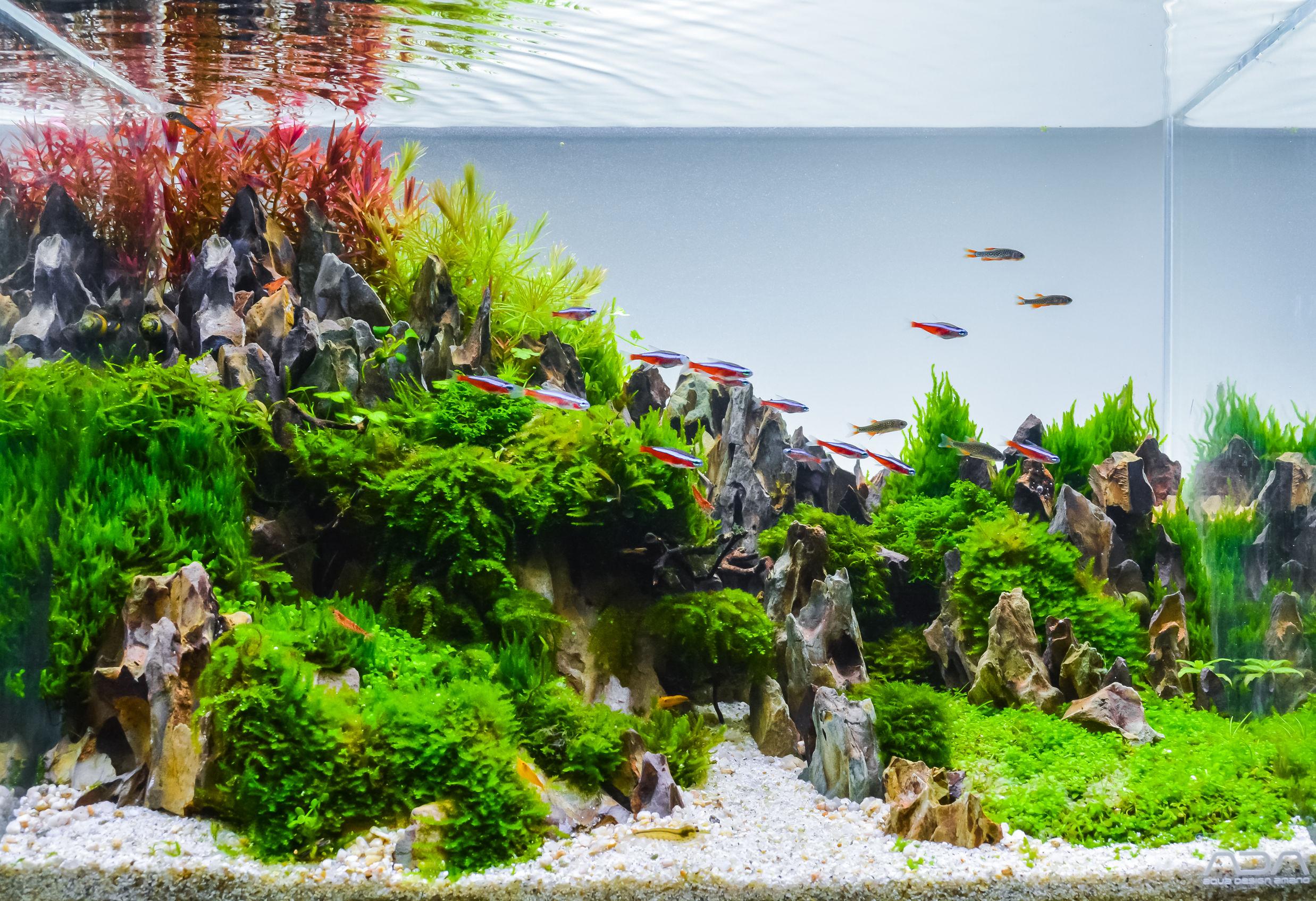 Aquarium Komplettset Test