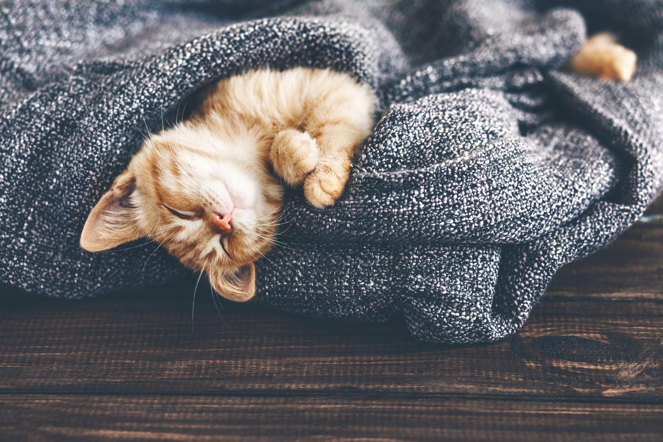 Flohmittel für Katze
