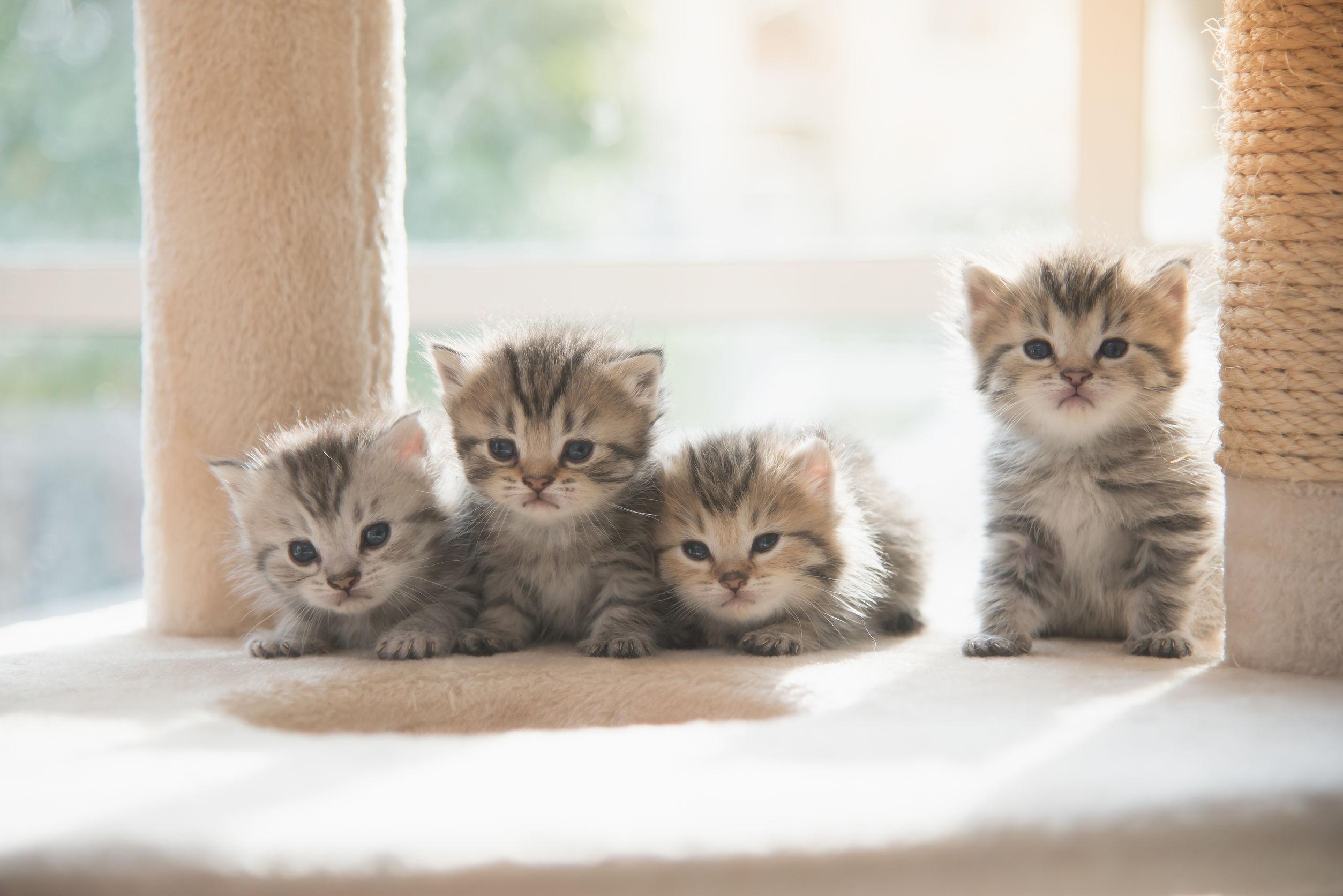 Katzenfalle
