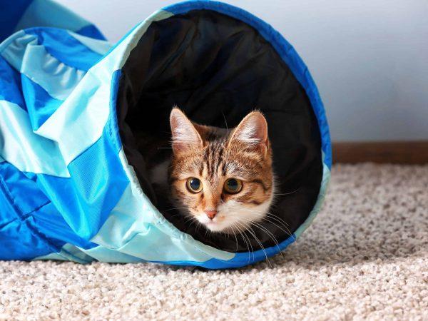 Bildquelle: 123rf.com / 108383416