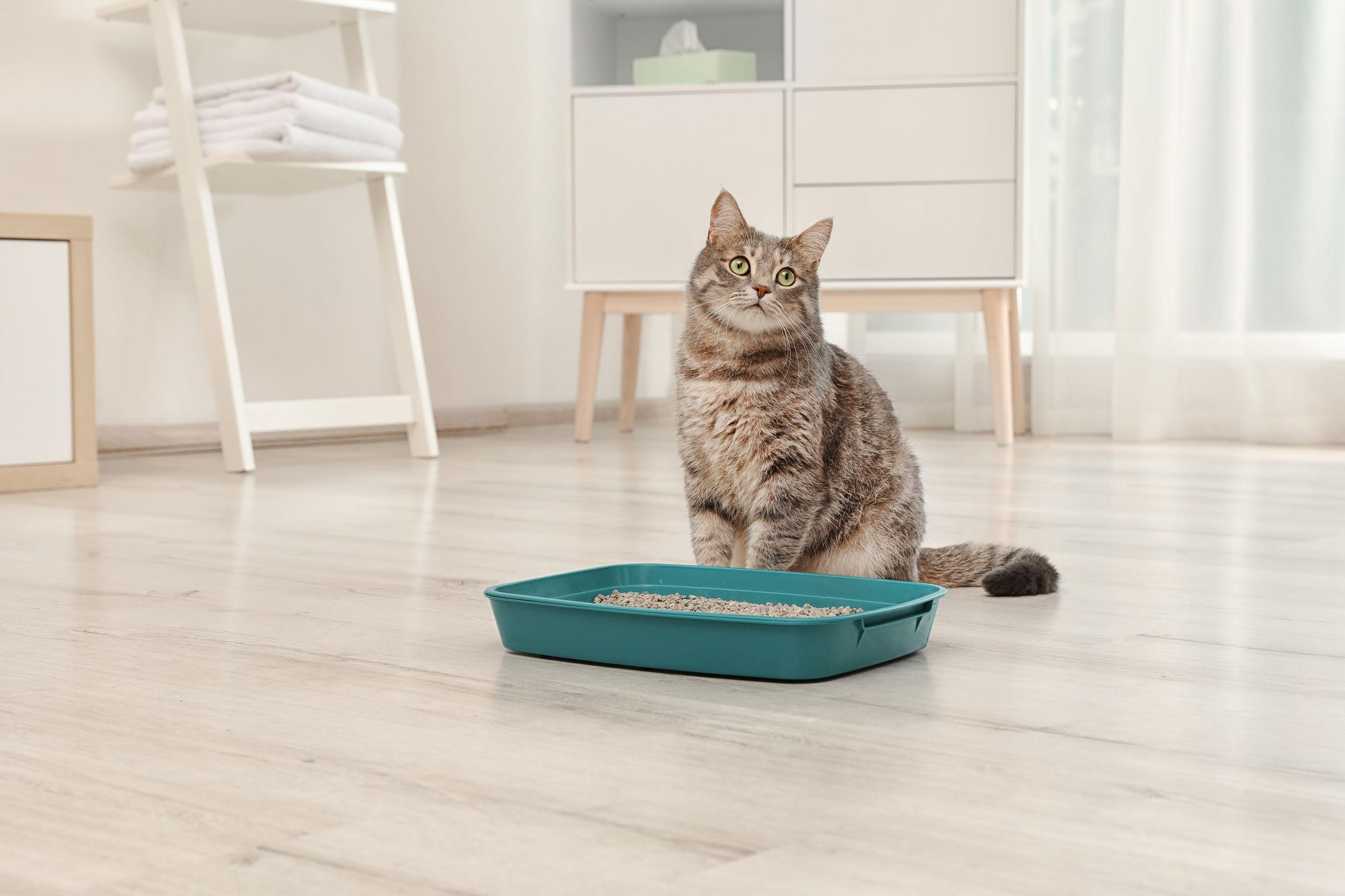selbstreinigendes-Katzenklo