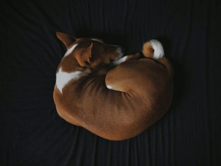 Hundematratze-3
