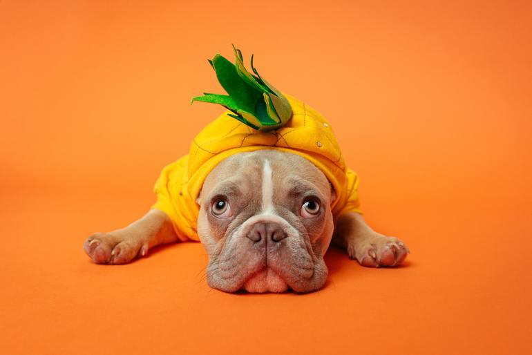 Hundekostüm