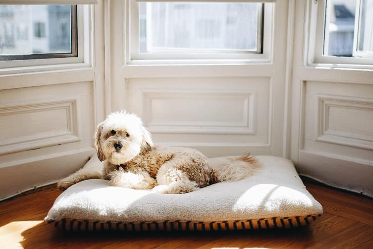 Allergiker Hunde: Den richtigen Hund auswählen
