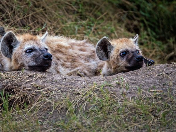 Im Frühjahr befinden diese sich in der Brut und Setzzeit und bedürfen besonderem Schutz, um ihren Nachwuchs aufziehen zu können. Bildquelle: David Clode/ 123rf