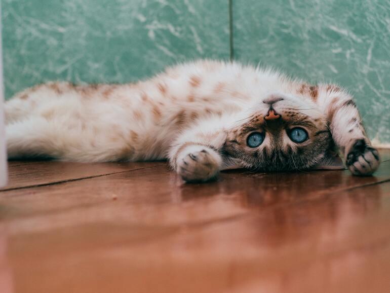 Coronavirus bei Katzen: Ist meine Katze gefährdet?