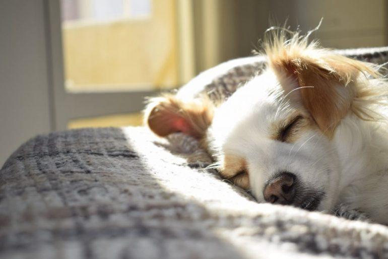 Arthrose beim Hund: Das solltest du darüber wissen
