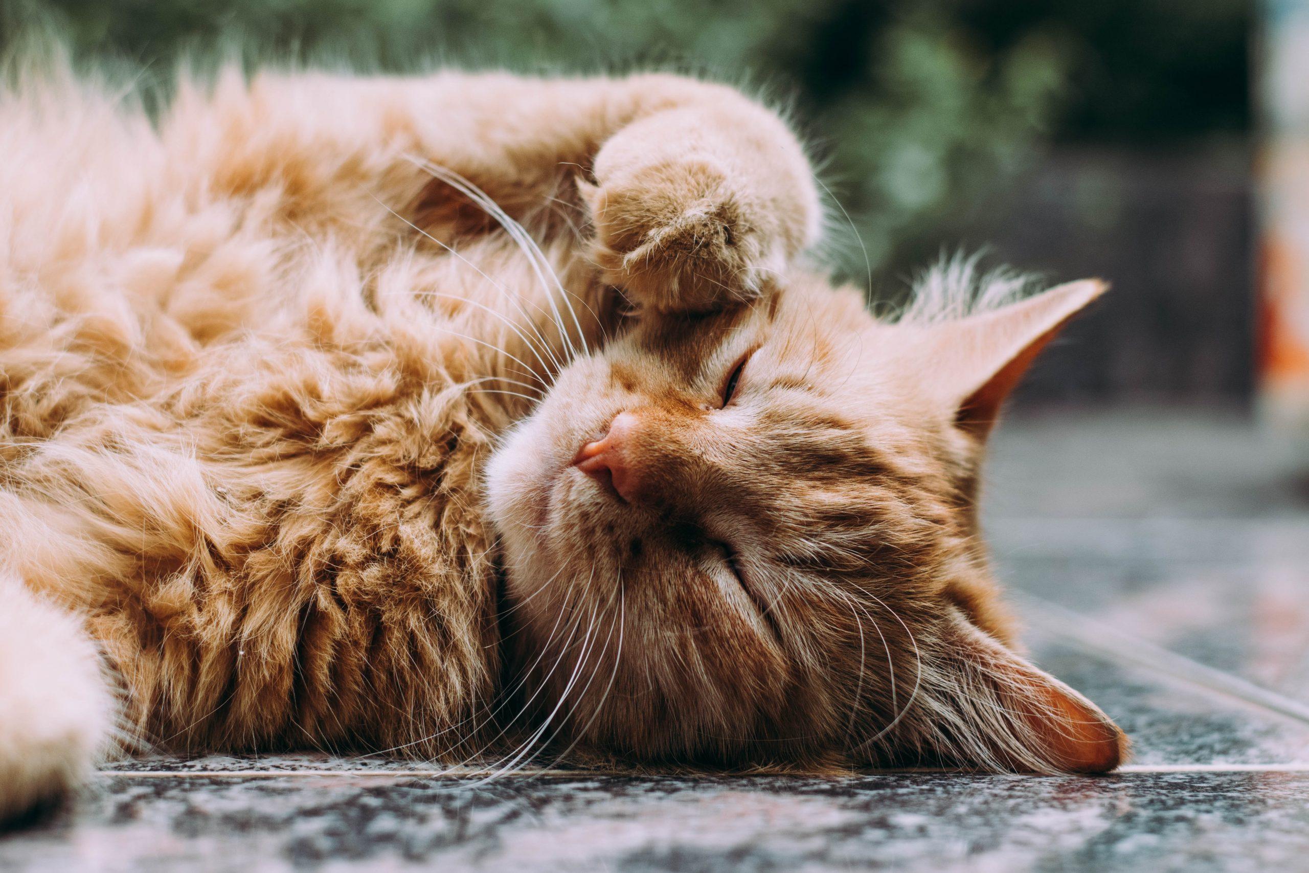 Clickertraining bei Katzen: Was ist das und wozu ist es gut?