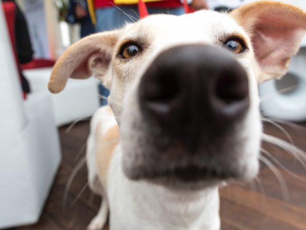 Seinen Hund allein zuhause zu lassen, fällt vielen Hundebesitzern nicht leicht. Ein Gefühl der Sicherheit bieten dir deshalb Hundekameras. Bildquelle: Agatha / 123rf