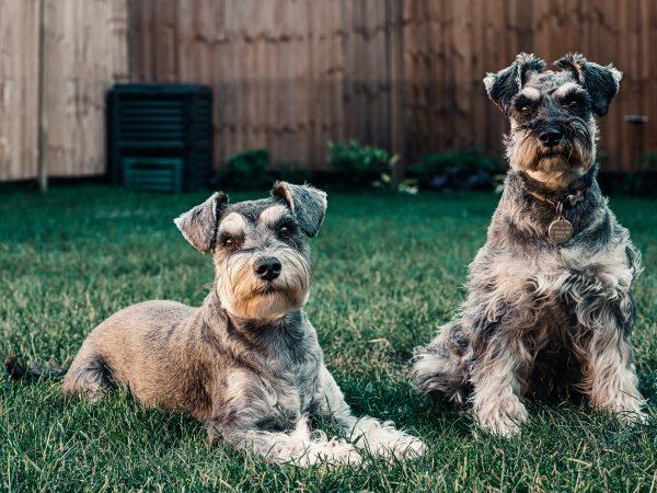 Der Lieblingsplatz für Hunde, um sich zu erleichtern, ist der Rasen. Bildquelle: Sebastian Coman Travel /pexels
