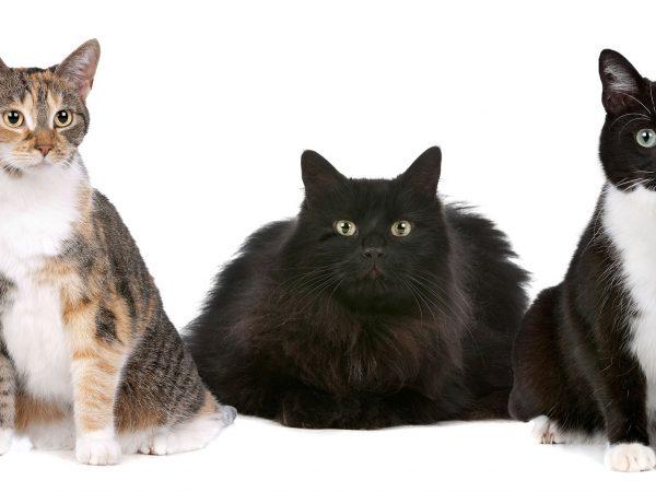 Katzen bevorzugen Nahrung, die zu einem sehr großen Teil aus Proteinen besteht. Bildquelle: Erik Lam / 123rf