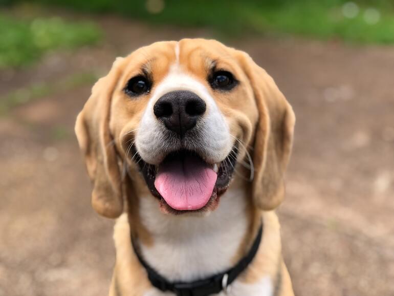 Frontalaufnahme Hund
