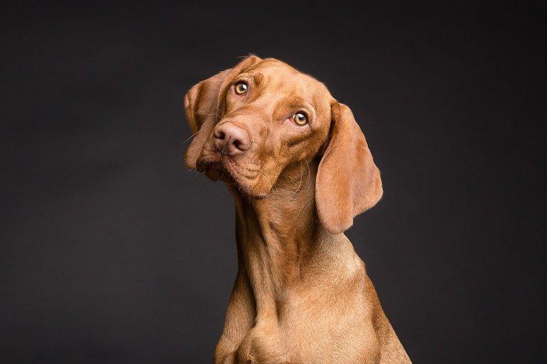 Analdrüse beim Hund: Darauf solltest du achten